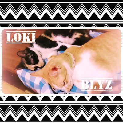 Sleepwell furry buddies. HalfBrothers Loki Blyz FelineDomesticus Perrysons