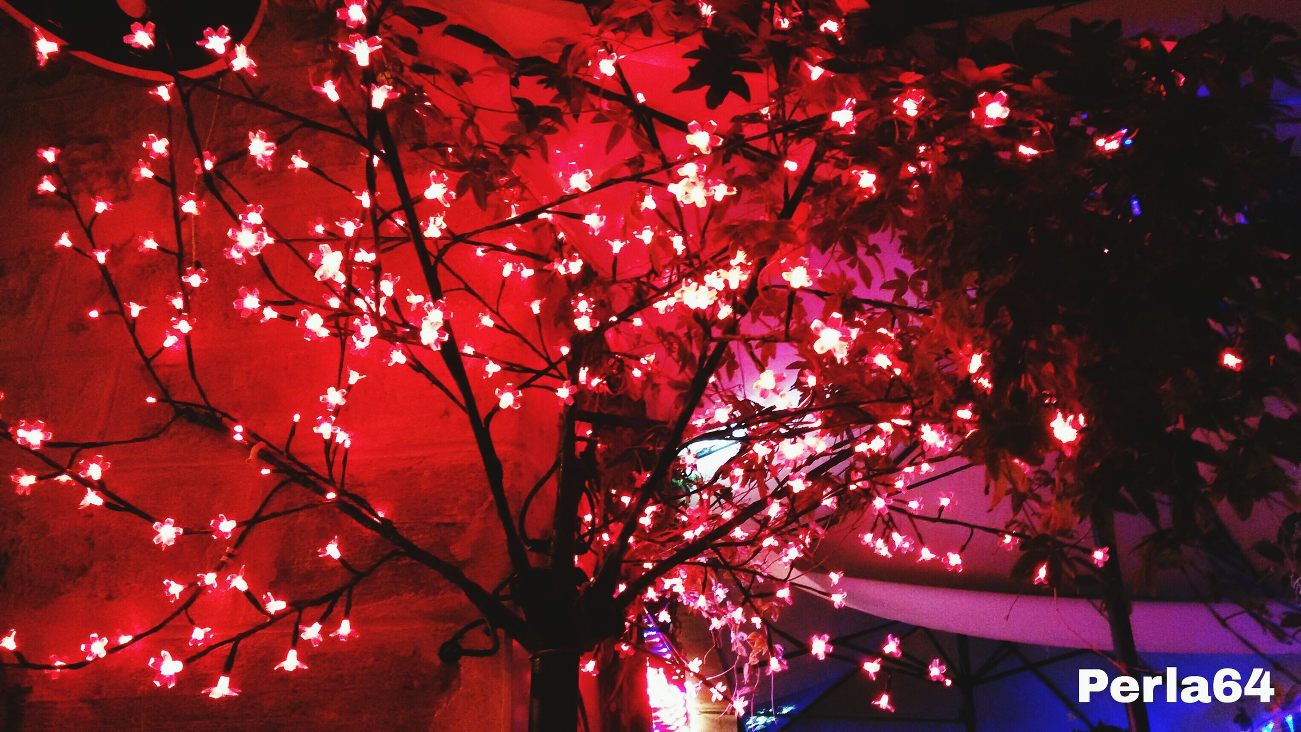 tree, red, branch, nature, no people, low angle view, beauty in nature, outdoors, growth, sky, illuminated, architecture, day