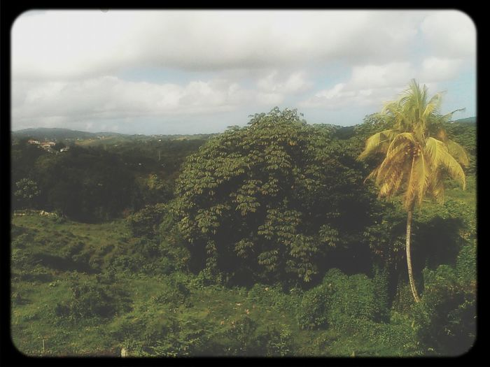 Belle Martinique...