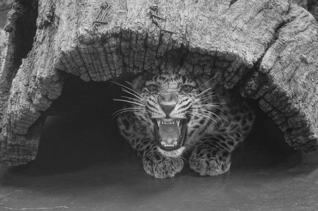 서울 대공원 동물원에사 Animals Cats Rx100