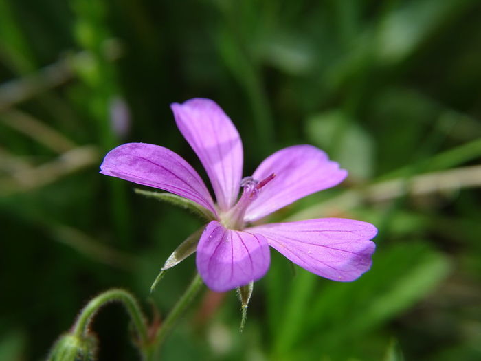 Nature Flower Beauty In Nature Freshness Blooming No People Day Focus On Foreground Flower Head Plant Fragility Purple Petal Outdoors Growth Close-up