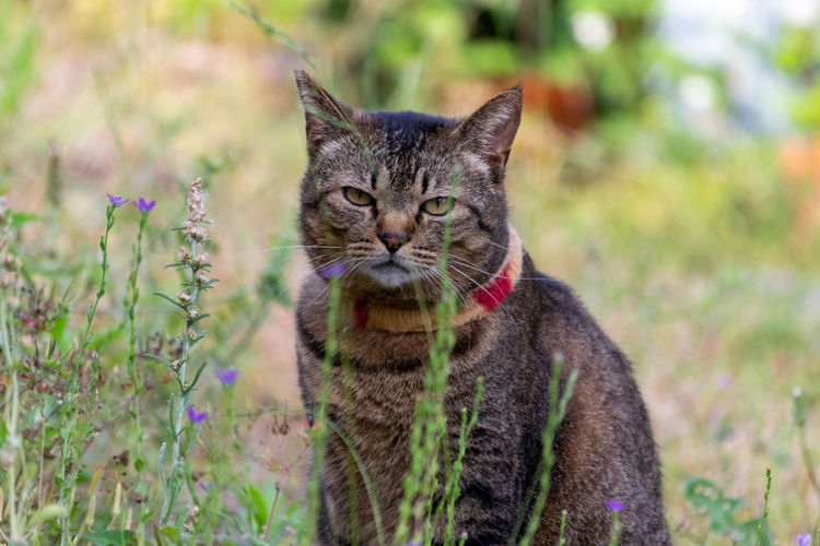 Cat Cat Feline