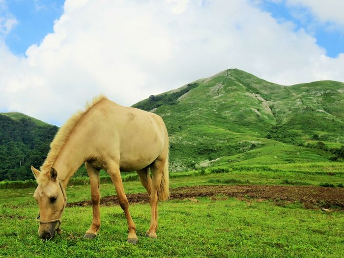 mountain horse 2 Horses Animal Themes Beauty In Nature Cloud - Sky Domestic Animals Field Grass Grazing Horse Horse Photography  Landscape Livestock Mammal Mountain Nature One Animal Outdoor Photography Sky