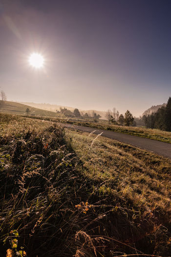 Winter Landscape Road Nature Nature Photography Beauty In Nature Tranquility Tranquil Scene Landscape Photography Scenics Scenics - Nature Environment Sunlight No People Outdoors Outdoor Photography Dew Autumn Morning Light
