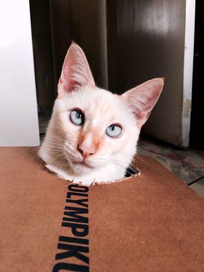 Pet Portraits Catalover Cats Of EyeEm