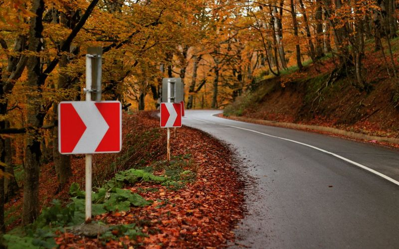 Arrow signs on roadside amidst trees in forest during autumn