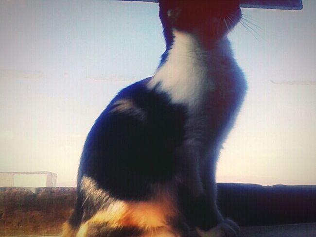 My cat! ♡♡ EyeEm Best Shots Photographylover MyLittleCat 💕 🐱 EyeEm Animal Lover Lovely Cat 😻
