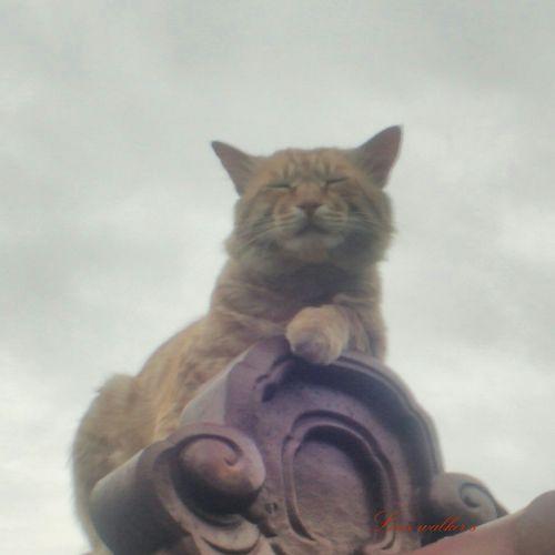 茶トラ男子部 Playing With The Animals 野良猫 自由猫 Cat Watching Stray Cat 茶トラ 野良猫ウォッチング 常連さん 瞑想中