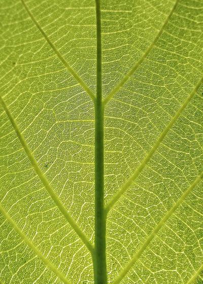 Full frame shot of raindrops on green leaves