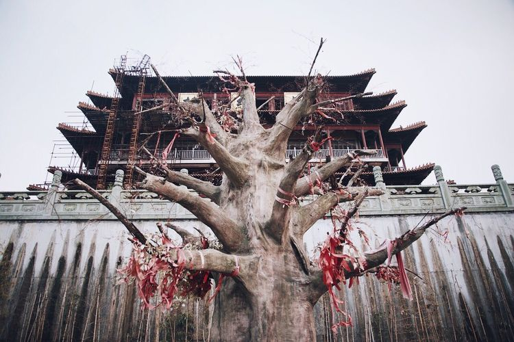 Low angle view of bare tree against historic temple