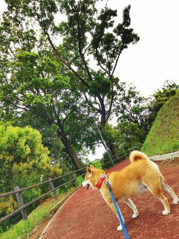 family🐶🐶🌟dog🌠Lan Dog EyeEm Gallery Tree Pets Sky Working Animal