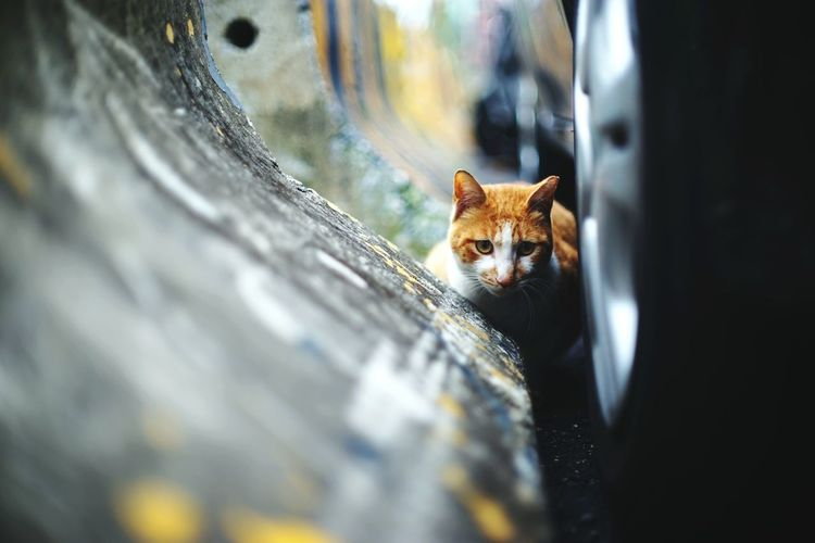 Cat Domestic Animals Alley Cat Focus Object Target Animal Themes Animal In The City Katz Cat Watching Streetphotography 街貓 Resist Pet Portraits