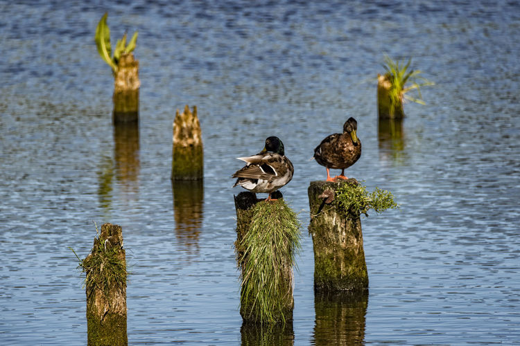 Birds Perched On Tree Stump In River