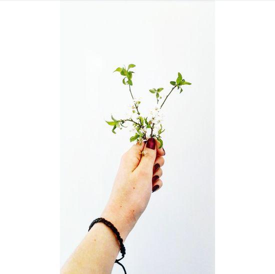 ☘ Green Greenflowers Flowers