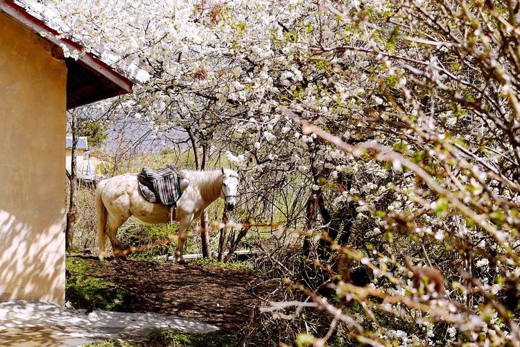 Close-up of horse by tree