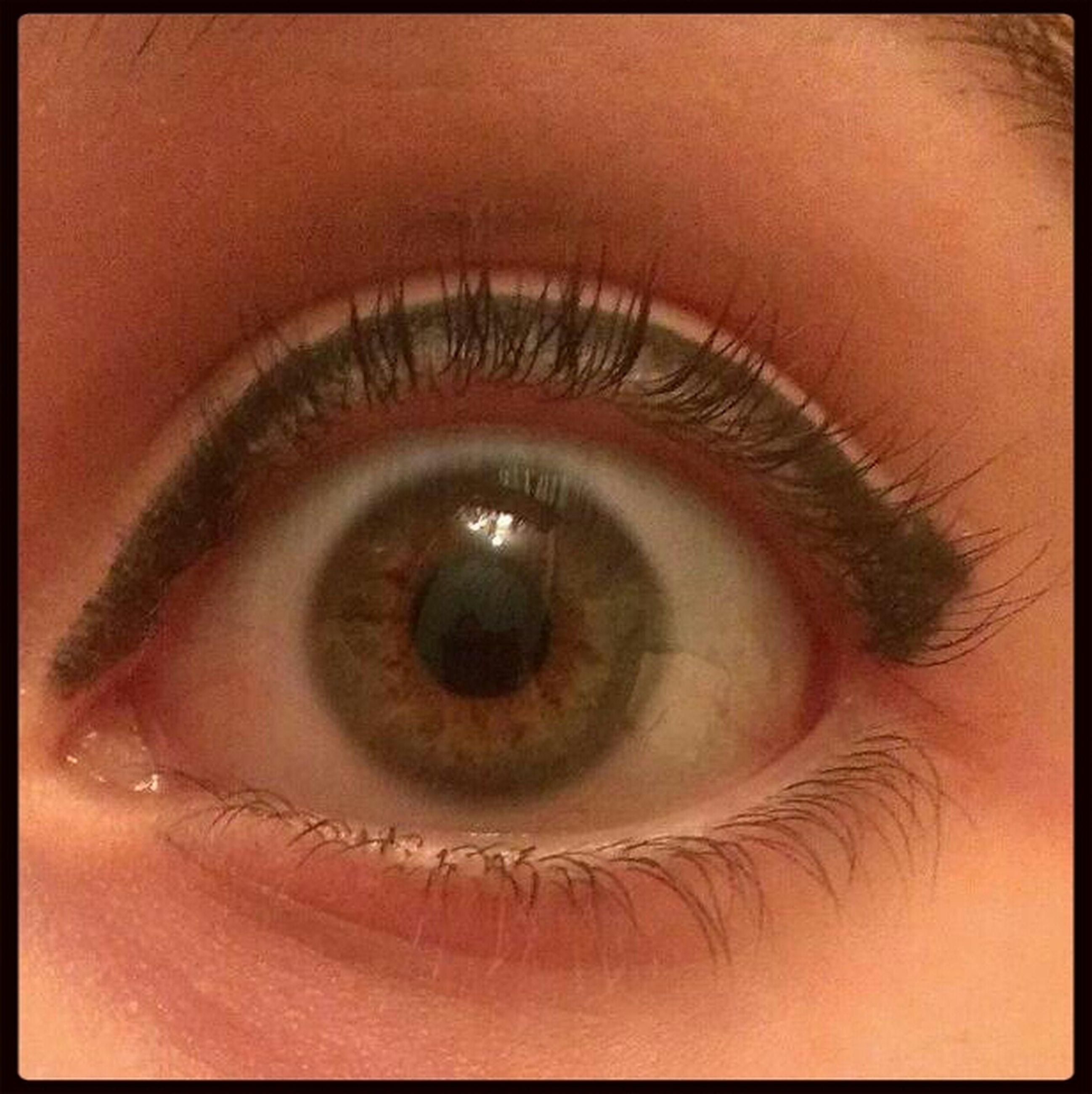 human eye, eyelash, eyesight, close-up, auto post production filter, sensory perception, transfer print, indoors, extreme close-up, part of, looking at camera, iris - eye, eyeball, reflection, portrait, human skin, full frame