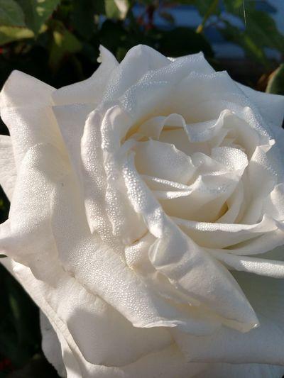 White Close-up