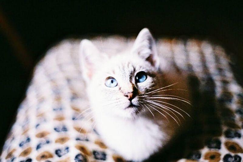 Catslife Lovecats Catsandmorecats Cx