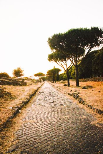 The Essence Of Summer Sunset Via Appia Via Appia Antica Rome Rome Italy Roma Rom Mystic Mystical Atmosphere Mystical Place Ancient Ancient Architecture Ancient Civilization Ancient Ruins Street Street Photography The Way Forward Tranquility Meditation Old Stones Paved Road Pine Pine Trees On The Way