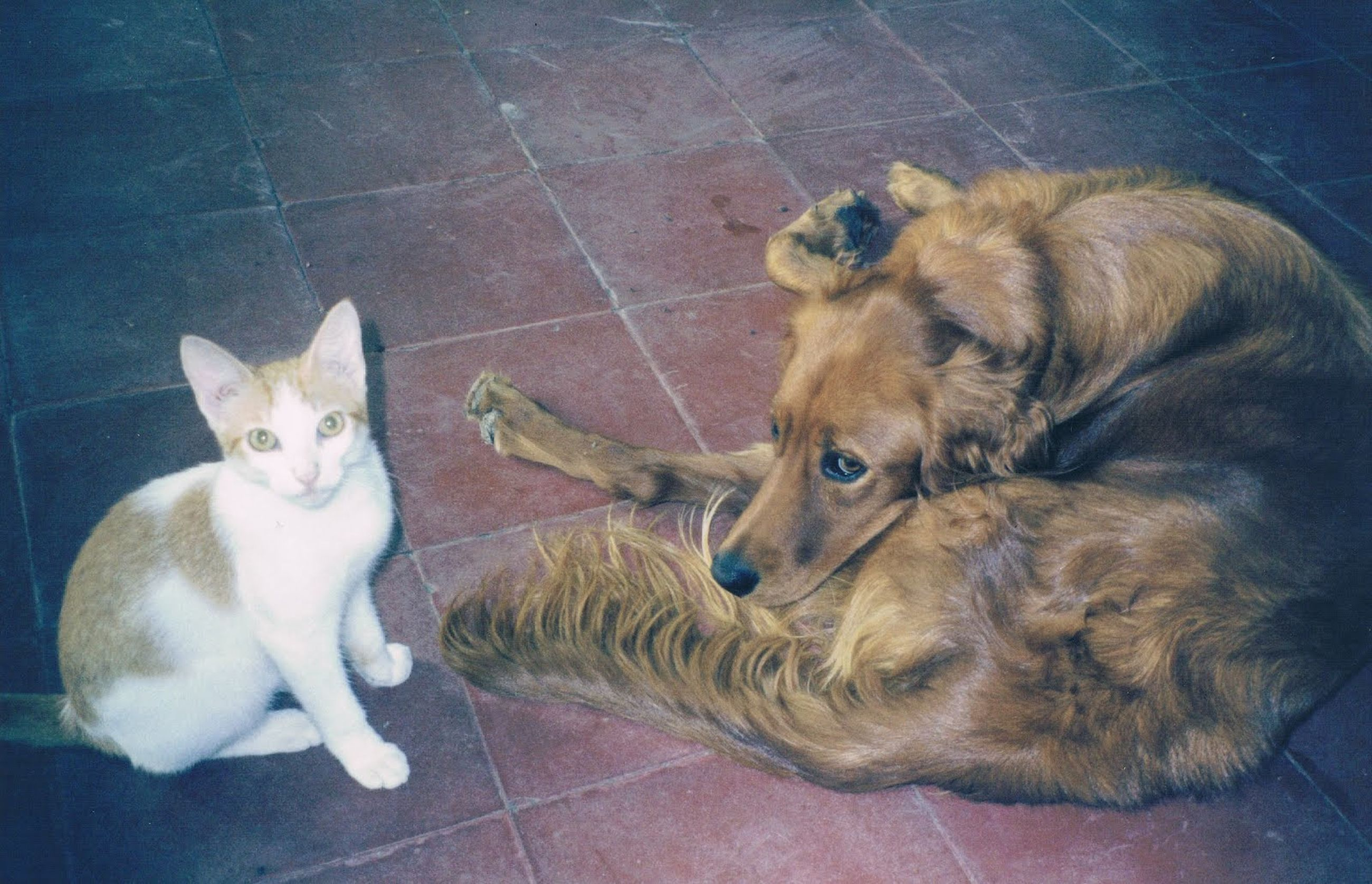 pets, animal themes, domestic animals, mammal, one animal, indoors, portrait, looking at camera, relaxation, two animals, domestic cat, cat, lying down, dog, resting, no people, feline, full length, sitting, high angle view