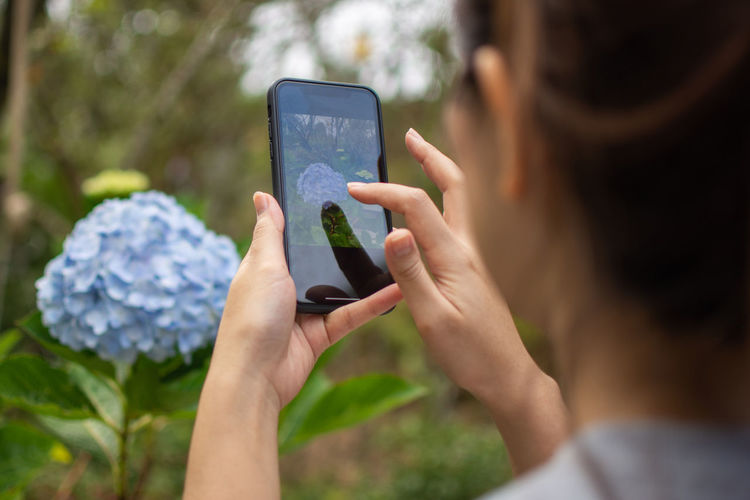 Close-up of woman photographing hydrangea with smart phone in park