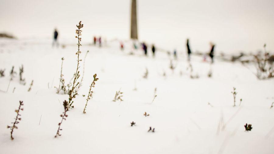 Troopershill Bristol Snow Landscape Landscapes