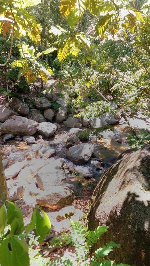 Waterfa in the jungle Day Nature Outdoors No People Green Color Tranquility Growth Water Tree Beauty In Nature Close-up Jungle Freshness Rocks And Water Jungle Trips Tree Picnic Holiday Leave Beauty In Nature Beach Tranquility Nature Growth Sand