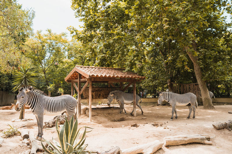 View of a horse in zoo