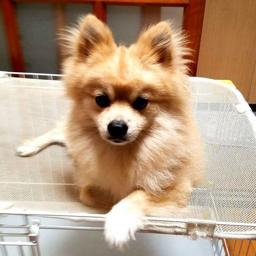 インスタントモヒカン One Animal Dog Pets Animal Themes Pure Animal Head  Animals Dogs Japan I Love My Dog DogLove EyeEm Gallery Dog❤ Pure Photography Japan Photography EyeEm