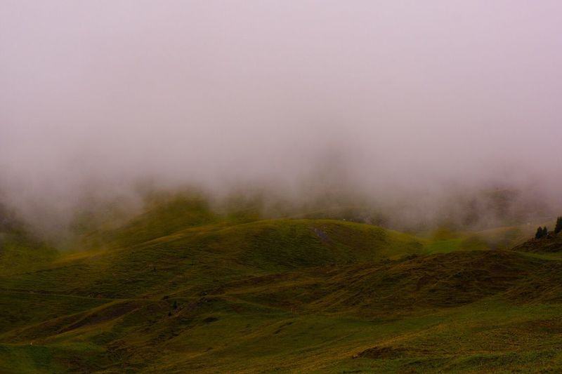 Outdoors Green Fog Foggy Mointains Arosa Forest
