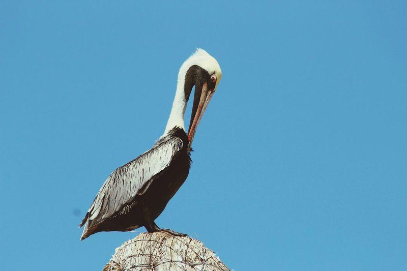 EyeEm Birds Birdseyeview Somewhere In Mexico Life On A Palapa Ocean View