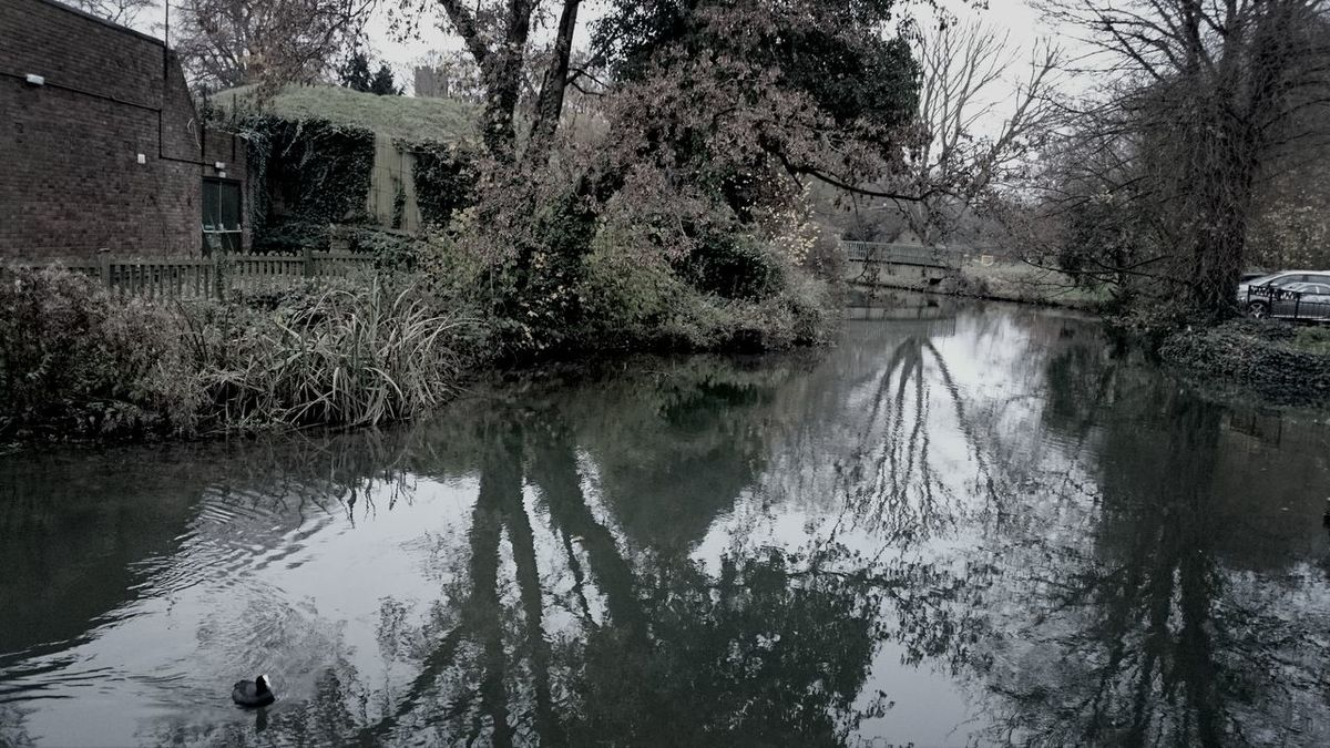 Water Reflections Hertford Trees December