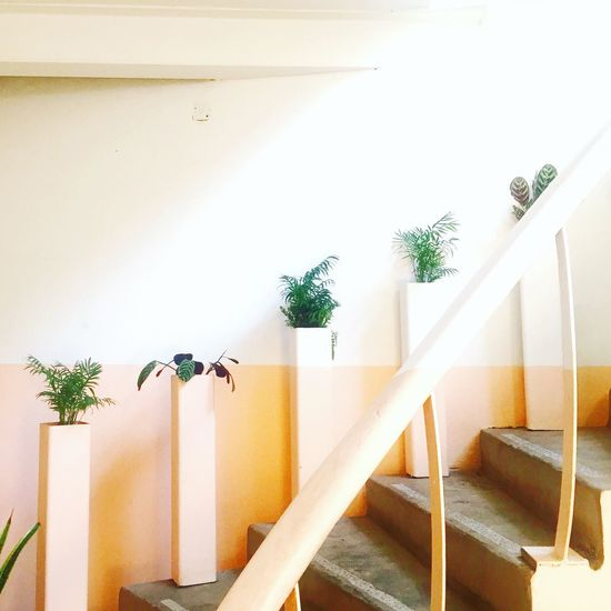 EyeEm Selects Steps And Staircases Steps Architecture Staircase Indoors  No People Built Structure Plants Duality Division Rythm Rythmic Minimalism Minimalist Architecture Minimalobsession Minimal Minimalist Interior Interior Design Pastel Pastel Colors