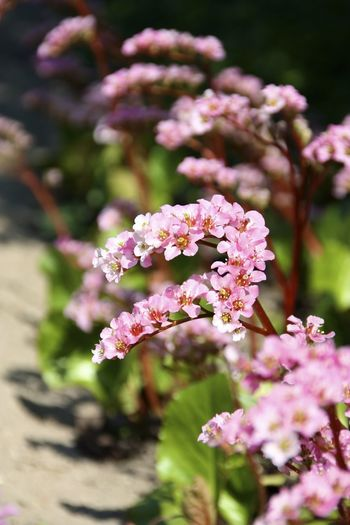 Pink Flowers On Sunny Day