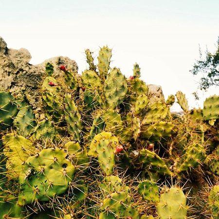 No necesariamente ser fuerte, sino sentirse fuerte 🌵. Cactus Plants Green Bestrong Instagood Instadaily Instamoments Haroconhache Photooftheday Trips