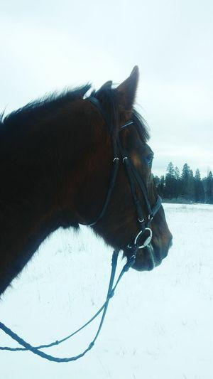 MyLove❤ MyBoy Horse Equestrian Nice Beautiful Snow Nature Winter Horseriding