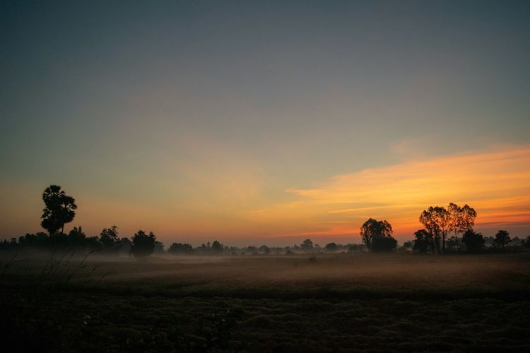 Good morning Surin. Tree Sunset Rural Scene Dawn Field Agriculture Beauty Multi Colored Fog Horizon