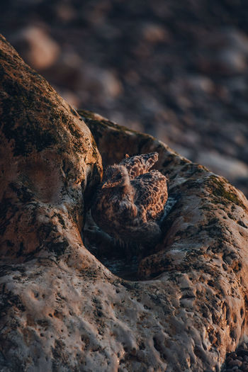 High angle view of seagull chick