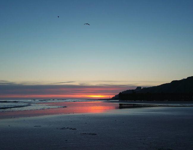 ... this Morning ... Sea Beach Landscape Coastal Feature Sky Water Scenics Animal Wildlife Birds Seagulls Sunrise Reflection Outdoors Mundesley Playa Norfolk Uk North Sea Sand Footprints