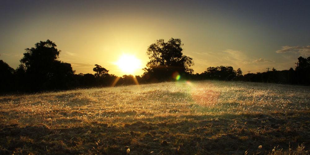Sunset over a paddock in Dunsborough, Western Australia #Dunsborough #Gold #Golden Hour #landscape #meadow #Nature  #paddock #sunset #sun #clouds #skylovers #sky #nature #beautifulinnature #naturalbeauty #photography #landscape #trees Instapic #instaphoto #instalike #instafollow #follow4follow #like4like #tagsforlikes #tags4likes #asian #philippines #australia #paris #london #uk #usa #ksa #uae #foodstagram Foodgasm Foodporn Landscape #Nature #photography Margaret River First Eyeem Photo