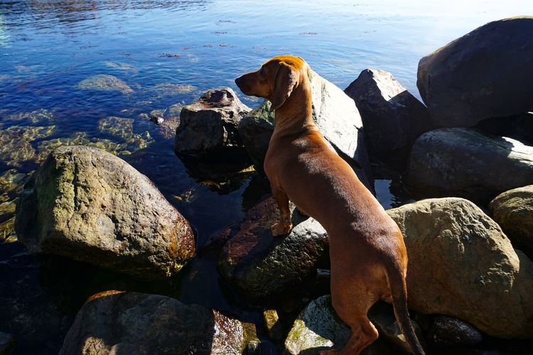 Dog on rock in sea
