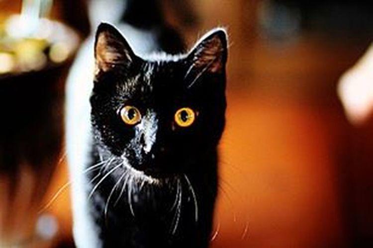 Animal Animal Themes Black Color Close-up Domestic Animals Domestic Cat Eyeball Feline Indoors  Looking At Camera Mammal No People One Animal Pets Yellow Eyes