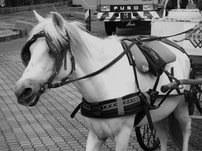 Horse Domestic Animals Horse Cart Mammal One Animal Transportation Day Outdoors Blackandwhite Taking Photos Mediocre Beginner Mode Of Transport