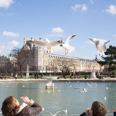 Mouettes Tuileries