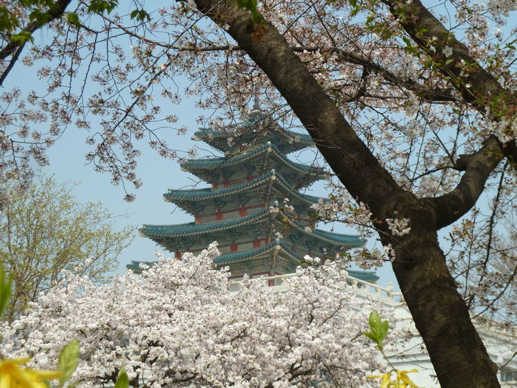 Changdeokgung Changdeokgung Palace Day Garden Garden Photography Gardens Koreanarchitecture Outdoors Royalgardens Tree