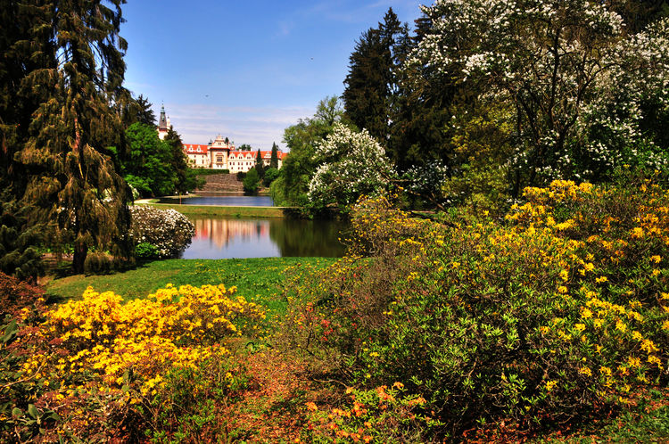 Czech Pruhonice park landscape with Pruhonice castle reflecting in the lake in blooming spring time. Prague. The park is listed as a UNESCO World Heritage Site Castle European  Pruhonice Castle UNESCO World Heritage Site Architecture Building Building Exterior Built Structure Europe Flowering Plant Garden Lake Ornamental Garden Průhonice Průhonický Park Sky Spring Flowers Spring Flowers Travel Destinations Water