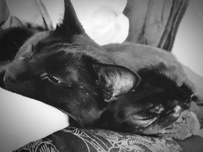 Animal Themes Close-up Domestic Animals Cats 🐱 Cats Of EyeEm Dogstagram Dogoftheday Dogs Of EyeEm Cat Of Eeyem
