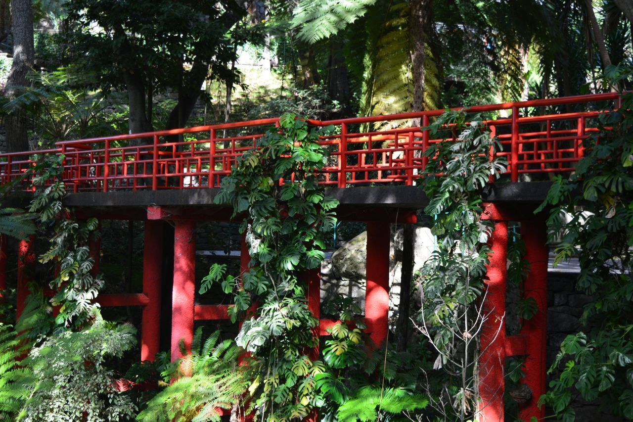 plant, tree, architecture, built structure, growth, day, nature, green color, no people, red, outdoors, low angle view, religion, belief, forest, connection, bridge, spirituality, park, bridge - man made structure, shrine