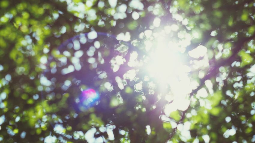 Bokeh Photography Nature Flares In Nature Leaf Day Eyeemphotography Lightofthesun