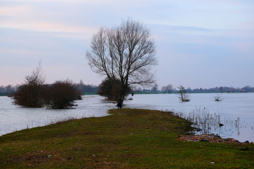 The river IJssel in Deventer, Overijssel, the Netherlands Dutch River Bare Tree Beauty In Nature Branch Cold Temperature Day Dutch Landscape Grass High Water Level Landscape Nature Outdoors Scenics Sky Tranquil Scene Tranquility Tree Water Winter